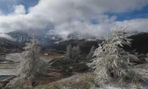 freddo alberi gelo inverno