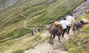 sbrinz route discesa cavalli sentiero